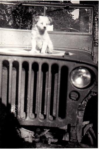 Army Jill's dog Pete.